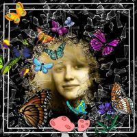 Butterflies 002