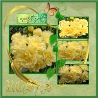 Banksia Rose