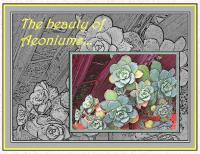 MY BEAUTIFUL  AEONIUMS