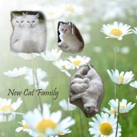 New Cat Family