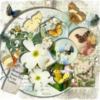 Butterflies in my garden