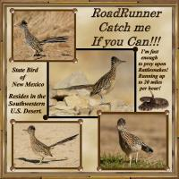 RoadRunner - Catch Me If You Can!