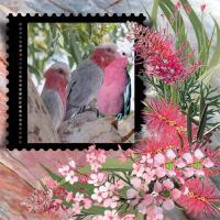 Aussie Birdlife