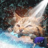 Cat Attack 001