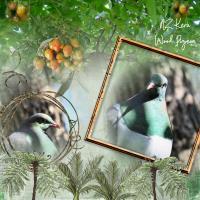 NZ Keru Wood Pigeon
