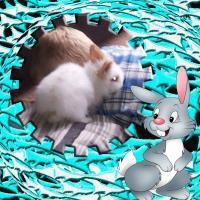 002 Harrison Rabbit