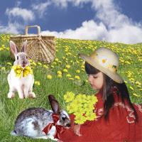 Cute Rabbits -2020