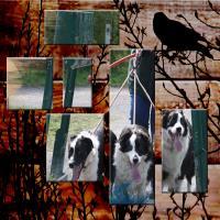 Elizabeth's Dogs 100