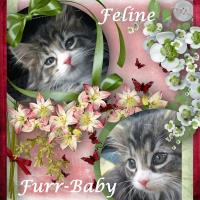 Feline Furr-Babies