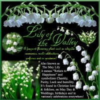 Lily of the Valley speaks...