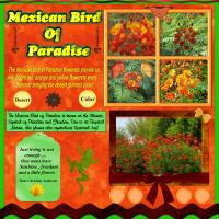 Mexican Bird of Paradise Symbolism