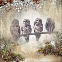 Owls in Winter.