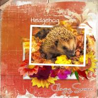 H IS FOR WHATEVER YOU LIKE - hedgehog