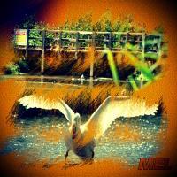 SWAN BRIDGE 22
